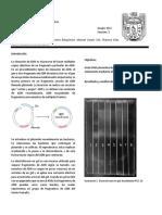 Aislamiento_DNA.docx