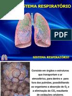 Sistema Respiratório 2019