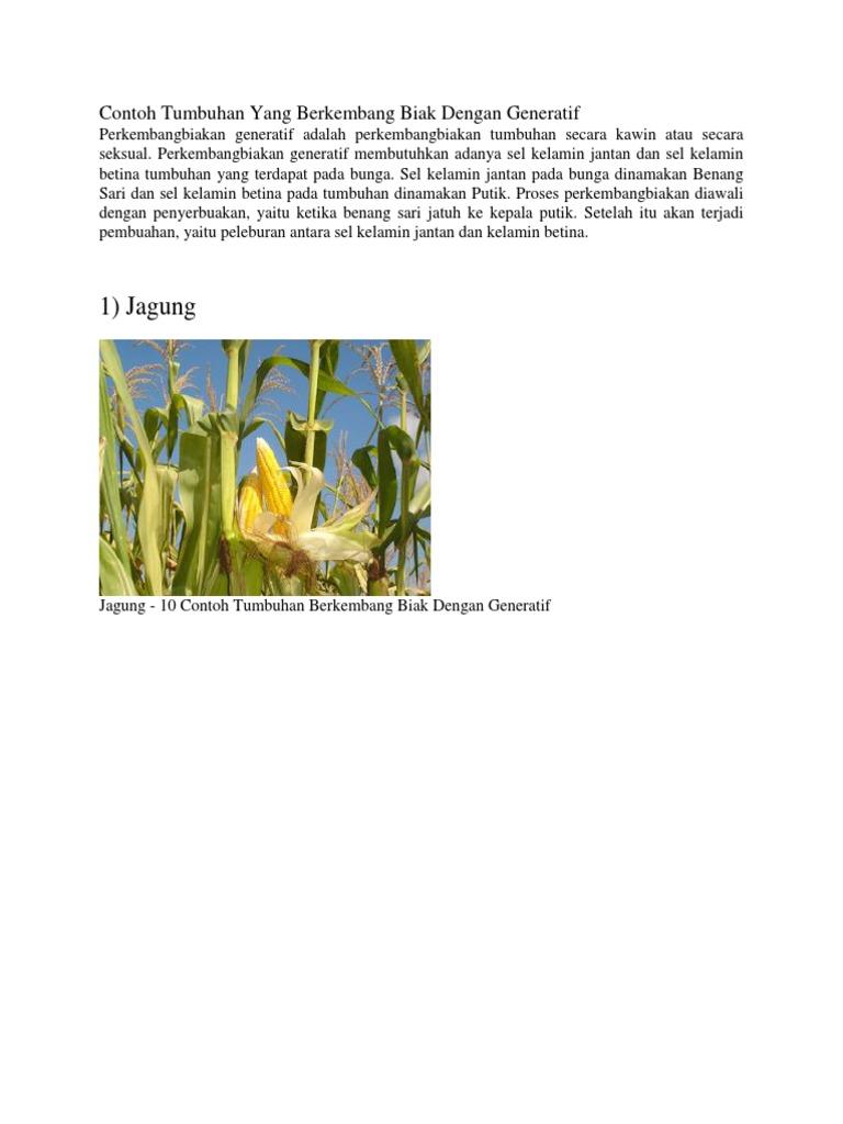 1 Jagung Contoh Tumbuhan Yang Berkembang Biak Dengan Generatif
