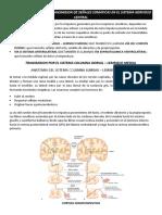 Vias Sensitivas Para La Transmision de Señales Somaticas en El Sistema Nervioso Central