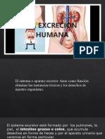 SISTEMA URINARIO2221212.pptx