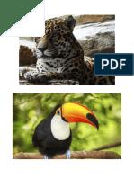 Peru Costa Sierra y Selva