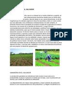 Agricultura Ganaderia y Mineria en El Salvador