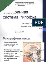 Endokrinnaya Sistema