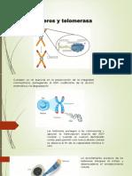 Estocàsticas Telomeros y Telomerasa