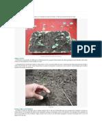 Cultivo del Brócoli.docx