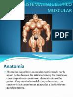 1 Sistema Esqueleticomuscular Derecho