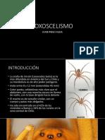 loxocelismo 5