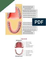 Gigi sulung vs gigi pemanen