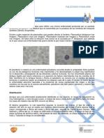 Paludismo o MAL.pdf
