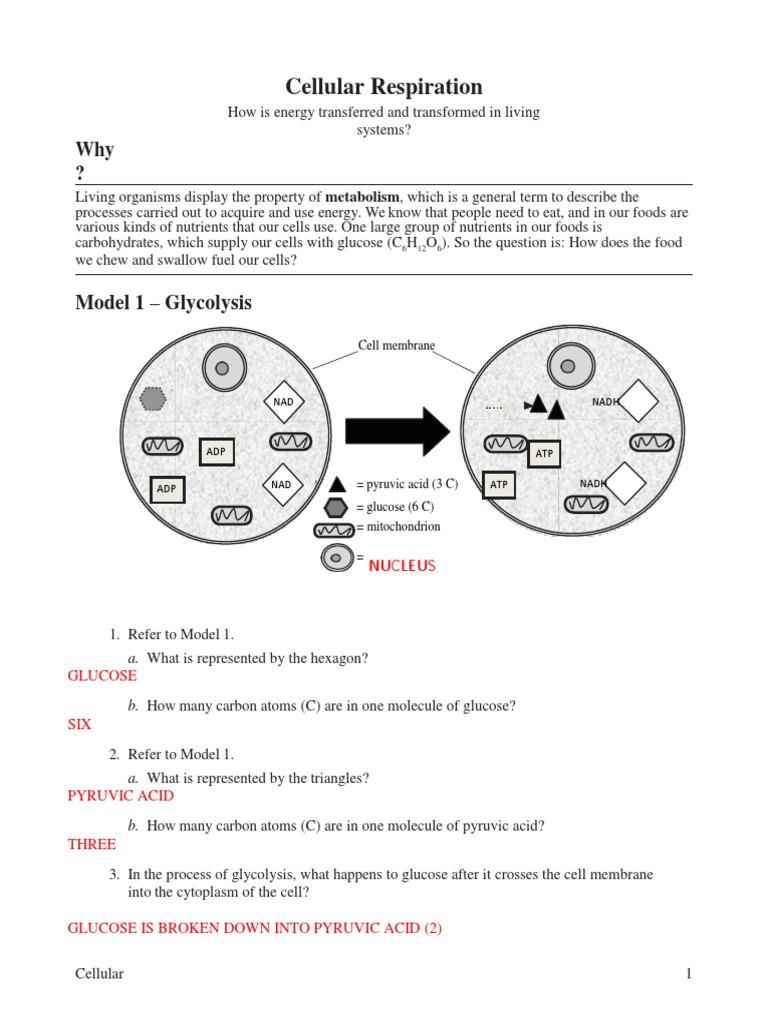 13 Cellular Respiration Key Cellular Respiration Adenosine Triphosphate
