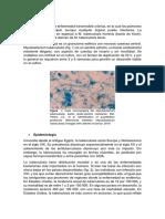 TUBERCULSOSIS patologia.docx