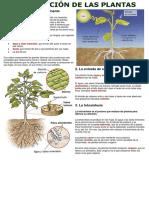 Nutrición en Plantas