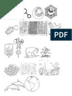 Imagenes Niveles de Organizacion