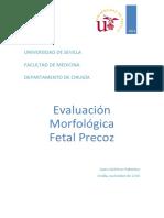 evaluación morfologica ecografia preco