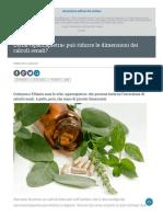 L'erba Spaccapietra può ridurre le dimensioni dei calcoli renali? - Fondazione Veronesi.it, 3 settembre 2019