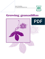 Cultivating Granadillas