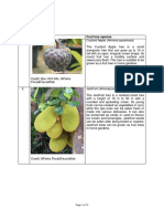 Fruit Tree Species