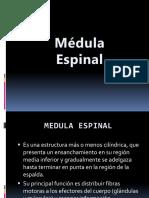 Medula Espinal y Nervios