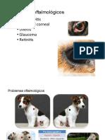 Manual Perros 3