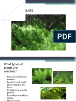 Seedless Plants PPT