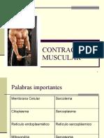 Contraccion Muscular.