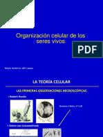 Organización Celular 1