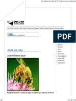Viene Un Futuro Sin Abejas 09012012 PDF 128kb