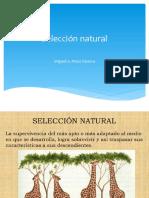 seleccion natural 1.pdf