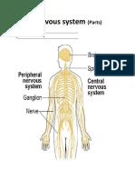 Nervous system.docx