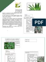 Guía Ilustrada de Plantas Medicinales