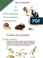 evolucion02-100418070505-phpapp02