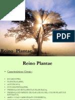 Reino Plantae 2 Ano