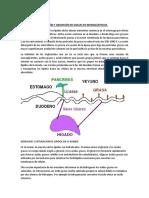 Digestión y Absorción de Grasas en Monogástricos