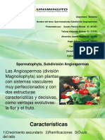 spermatophytas subdivision angiospermas.pptx