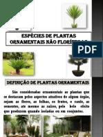 Slaide 3 - Cultivares de Plantas não Floríferas