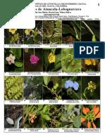 1089 Colombia Plants of Atuncela-loboguerrero