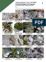 614-Liquenes-de-Popayan-a1.pdf
