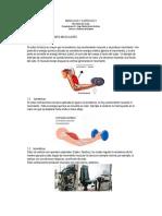 Músculos y Ejercicio II