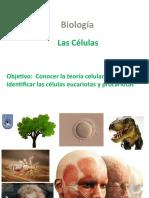 T. celular endosimbiótica - 8vo.pptx