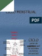 ciclo menstrual 2º medio