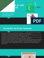 EXCRECION EN EL SER HUMANOS Y LAS PLANTAS.pptx