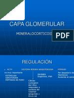 8 - CAPA_GLOMERULAR_SUPRARRENALES.ppt