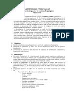 Informe # 3 Identificación de Géneros de Bacterias Fitopatógenas
