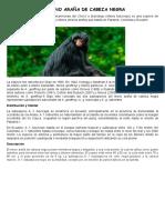 El Mono Araña de Cabeza Negra
