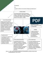 Mapa conceptual estructuras biologicas de la violencia.docx