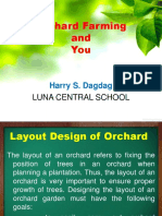 orchard farming