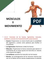 musculos y movimiento