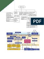 mapas conceptuales de  fisiopatologia