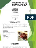 Enfermedades Avicola 1